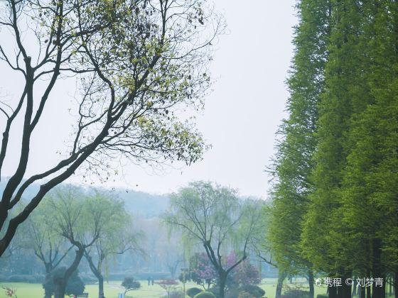 龍背山森林公園