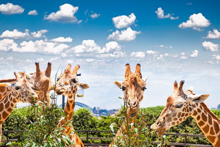 塔龍加動物園4