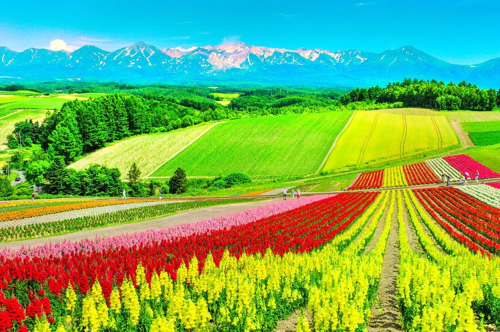 사계채의 언덕(시키사이노오카)