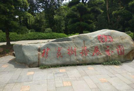 廣西珍貴樹種展示園
