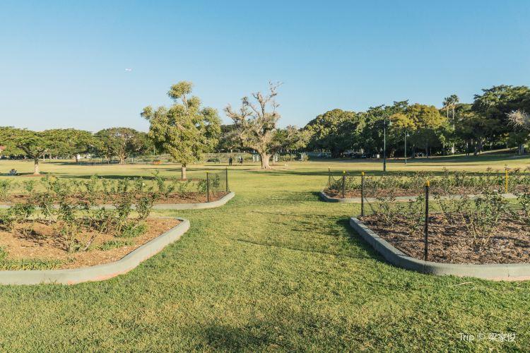 New Farm Park1