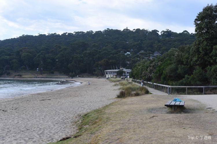 Lorne Beach2
