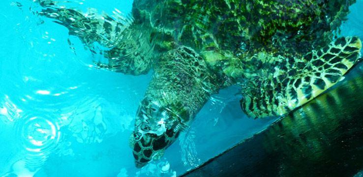 Sea Turtle Conservation Centre2