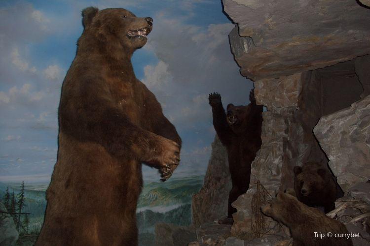 薩爾茨堡自然歷史博物館3
