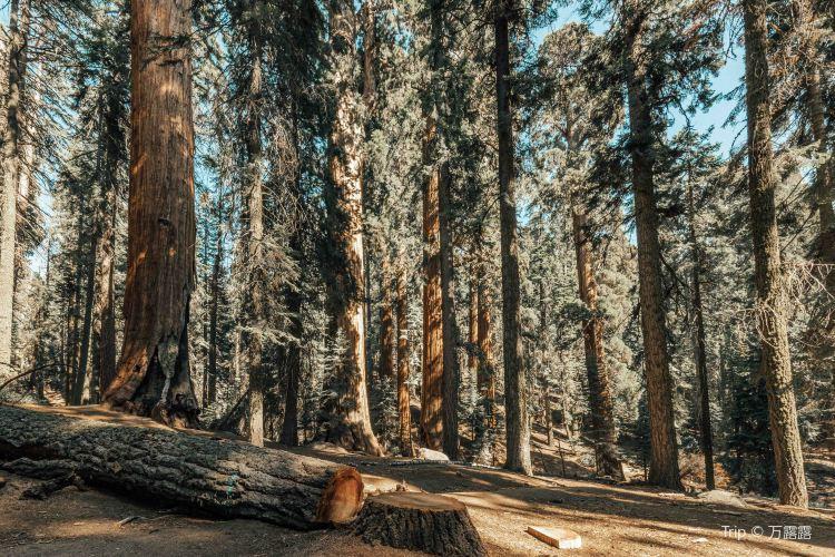 紅杉樹國家公園2