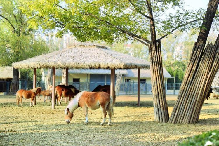 Jinan Zoo4