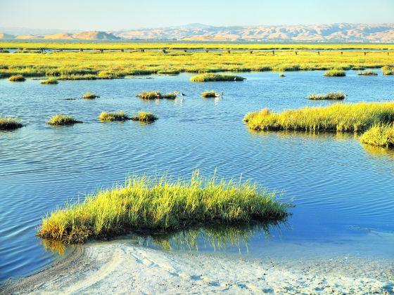 帕羅奧圖海灣濕地自然保護區