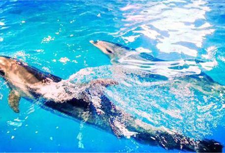 Zhonghe Dolphin Bay Ocean Park