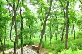 Mt Yunfengshan