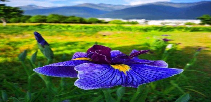 Yunshang Flower Sea4