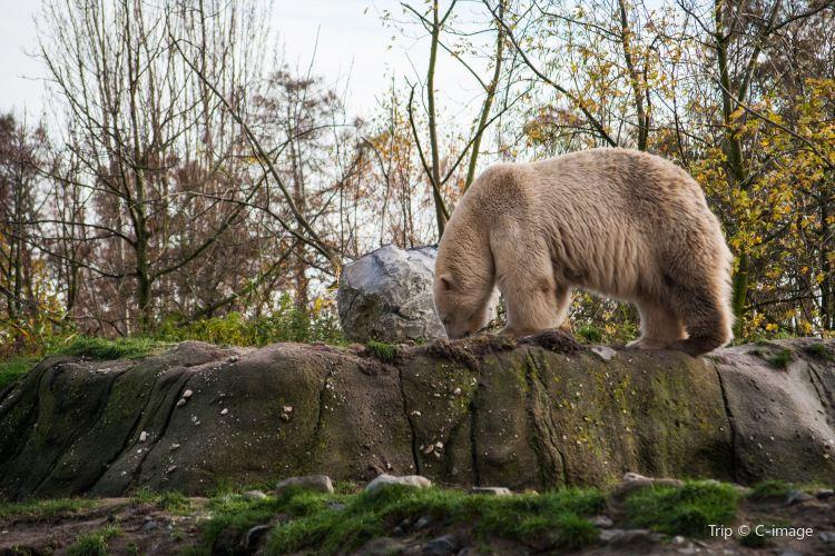 鹿特丹動物園1
