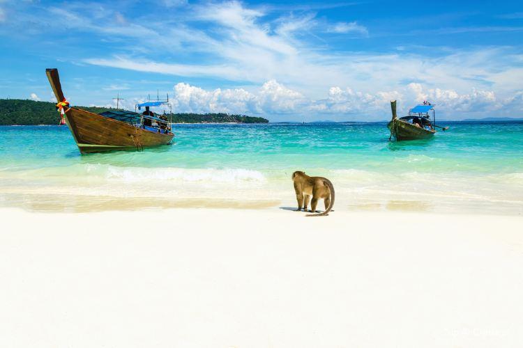 猴子海灘1