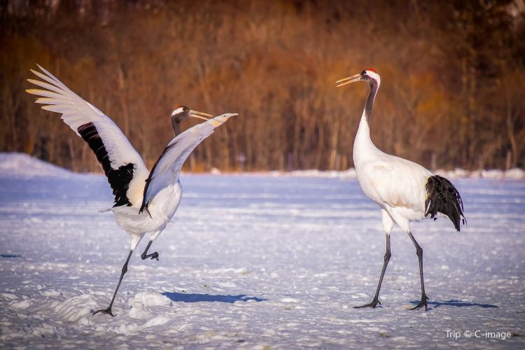 Kushiro City Red-crowned Crane Natural Park1