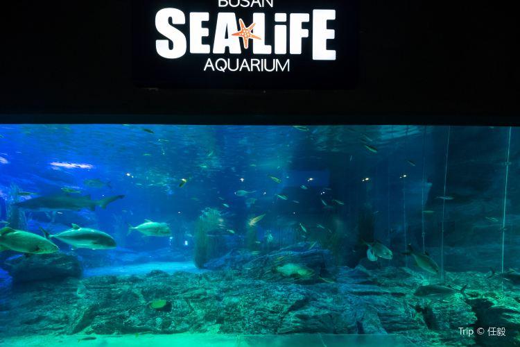 Busan Aquarium4
