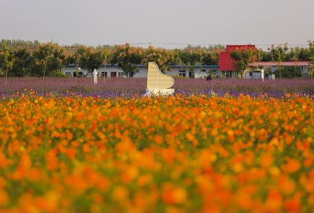 Shuanglou Flower Field