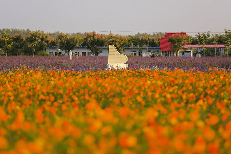Shuanglou Flower Field2
