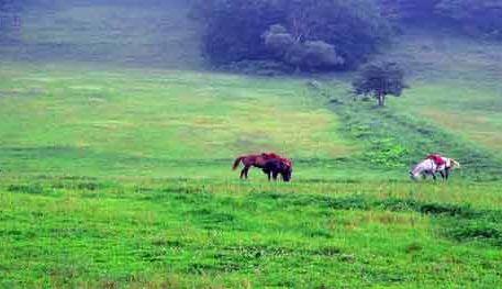 Shengshan Hunting Field