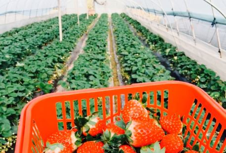 Nongfu Ecology Strawberry farm