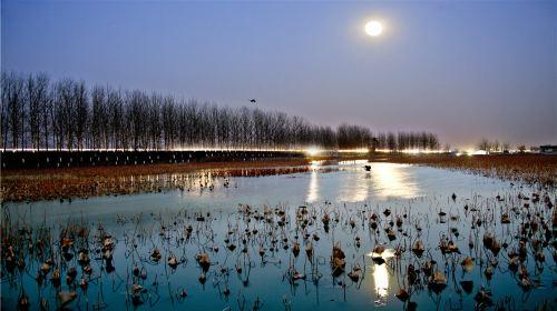 Canal Wetland Park