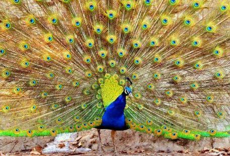 버드 싱잉 우즈 동물원  (빈하이중루점)