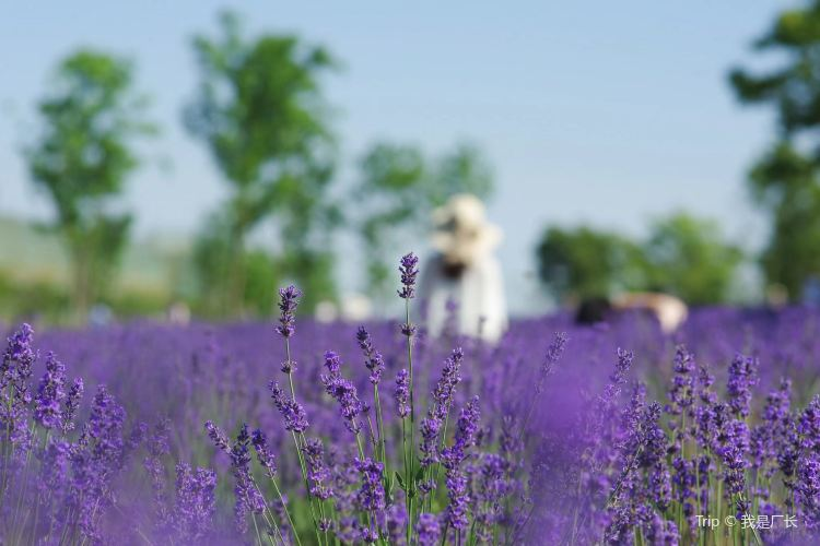 Momchilovtsi Herb Garden