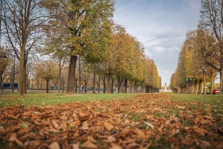 Tuileries Garden4