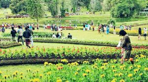 Pyin Oo Lwin,Recommendations