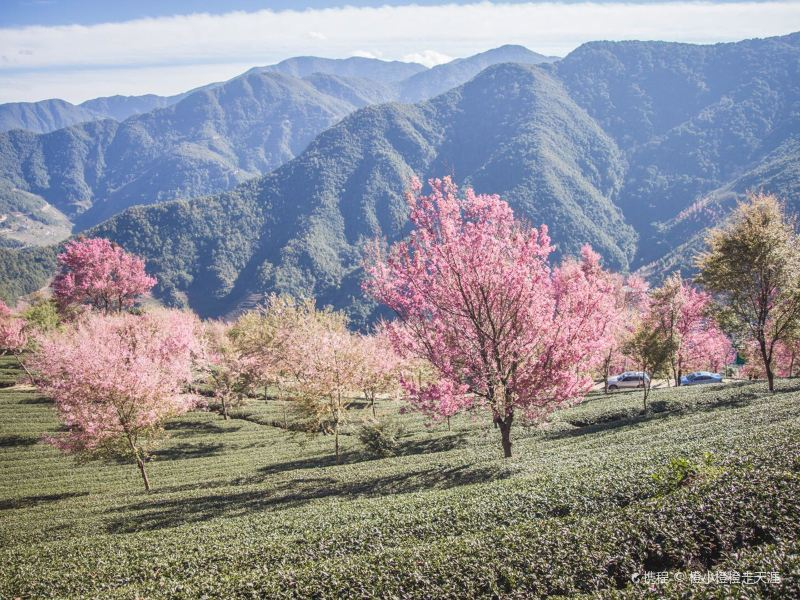 Wuliang Mountain Sakura Valley