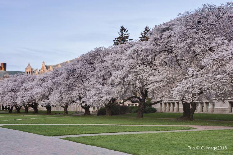 University of Washington4