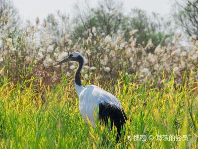 Yellow River Estuary Ecotourism Area