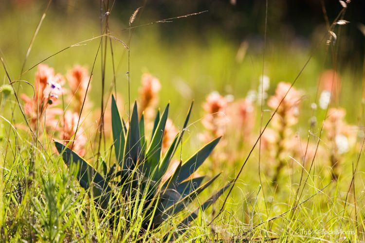 Wild Flower Walk