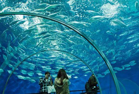 Turkuazoo水族館