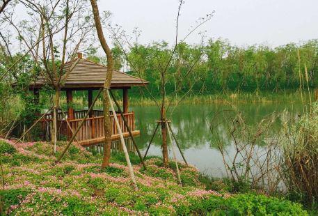 Xinlong National Ecology Forest Park