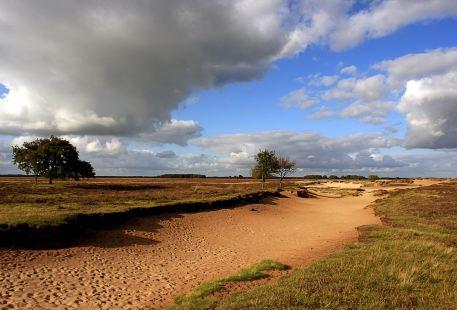 National park Dwingelderveld