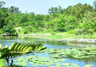景德鎮植物園