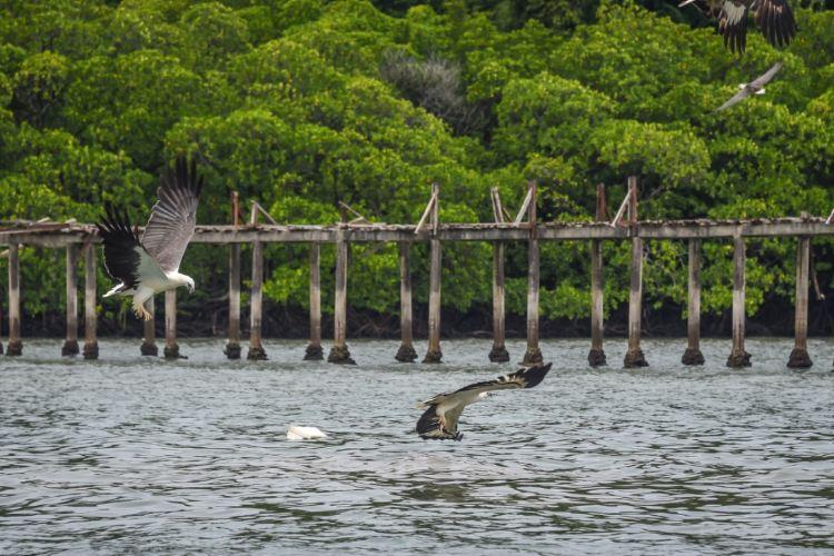 Mangrove Ecological Reserve3