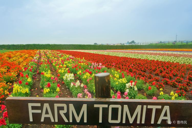 富田農場3