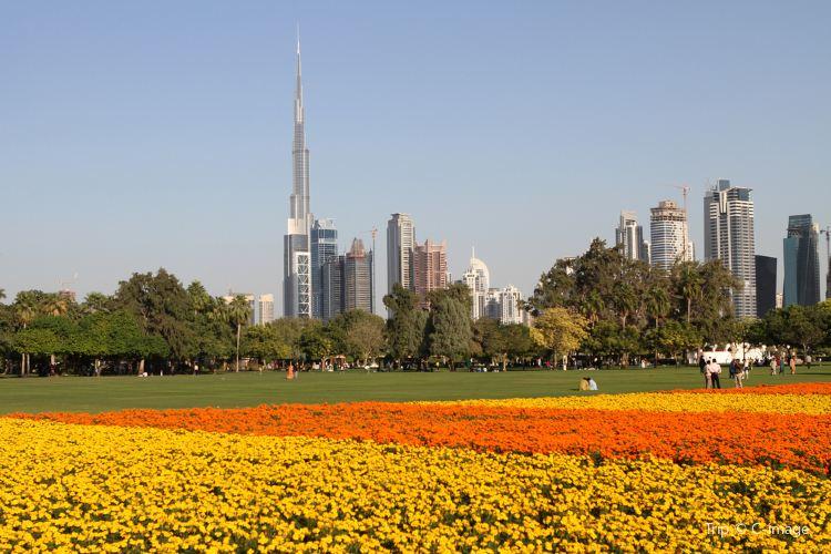 Safa Park1