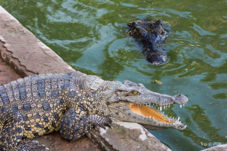 Siem Reap Crocodile Farm1