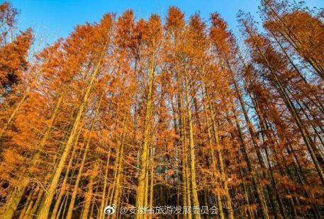 Yingzhou West Lake