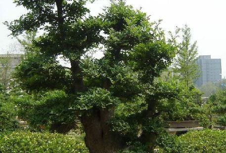 Bonsai Garden