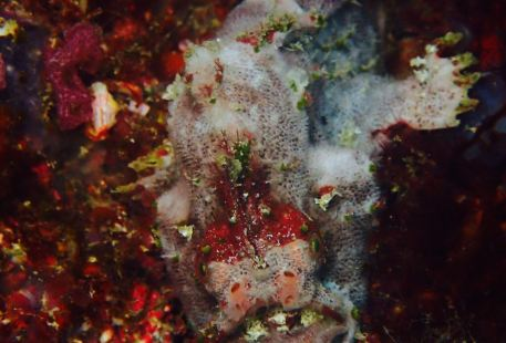 Devocean Divers Malapascua