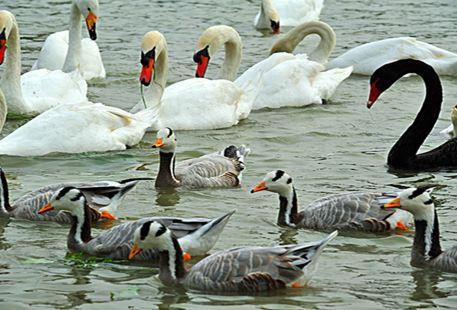 백조호(톈어호) 동물기지