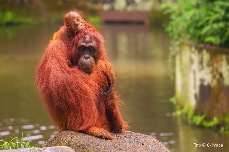싱가포르 동물원4
