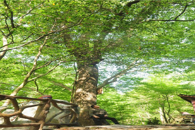 劉備洞峽谷風景區3