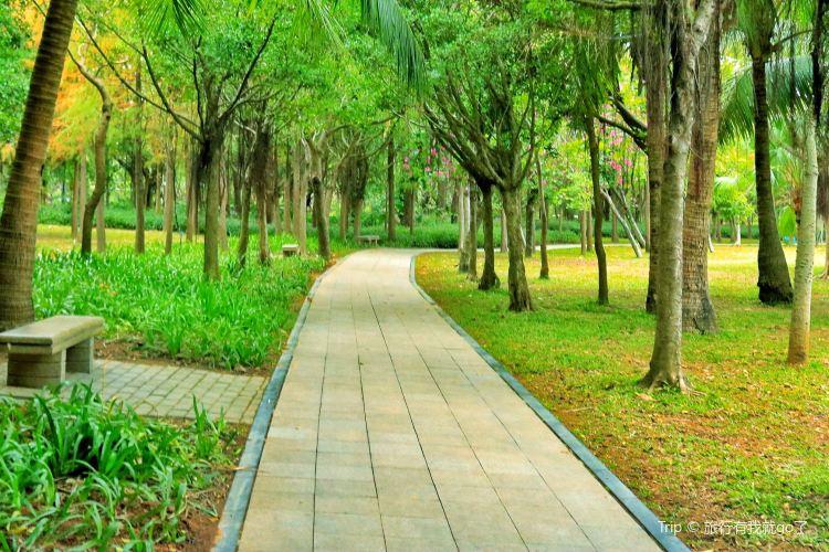 Shenzhen Mangrove Nature Reserve4