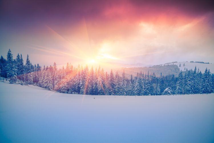 烏克蘭喀爾巴阡山脈原始毛櫸森林4