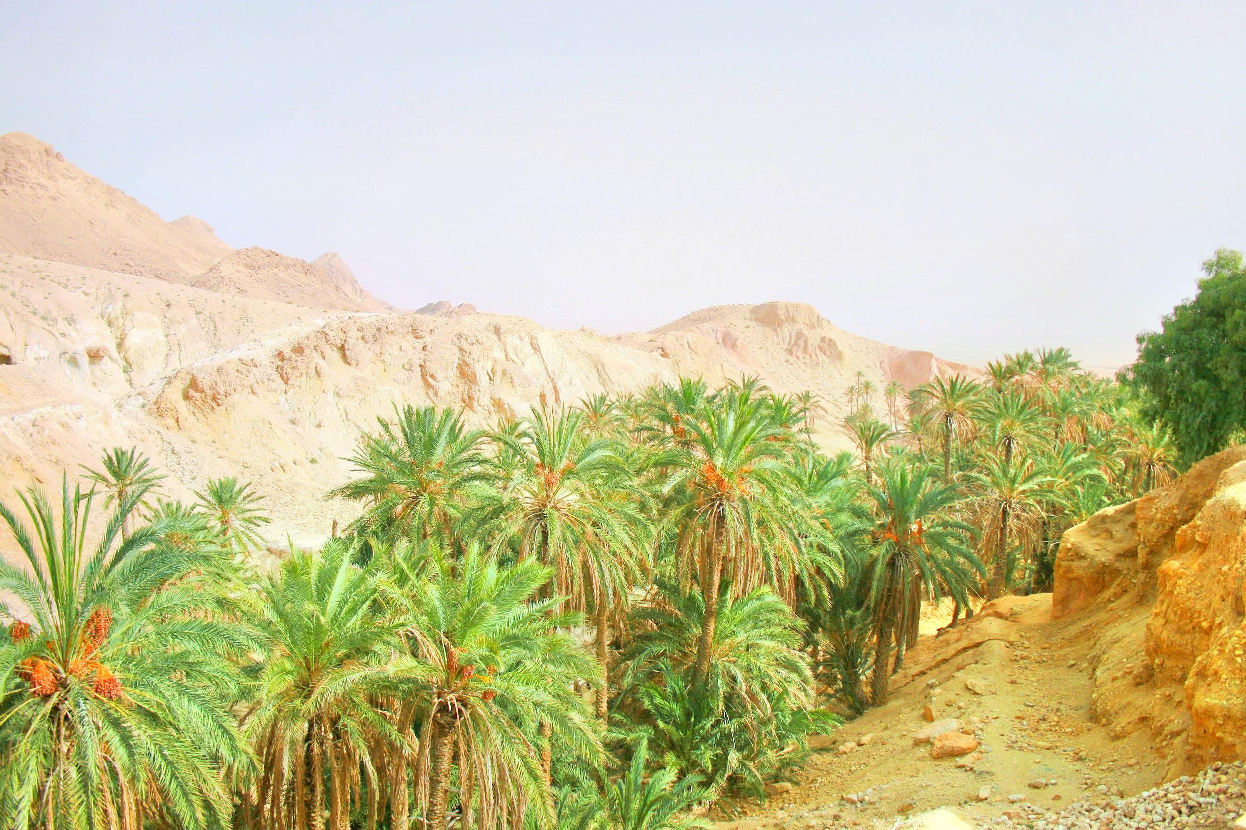Chebika Oasis