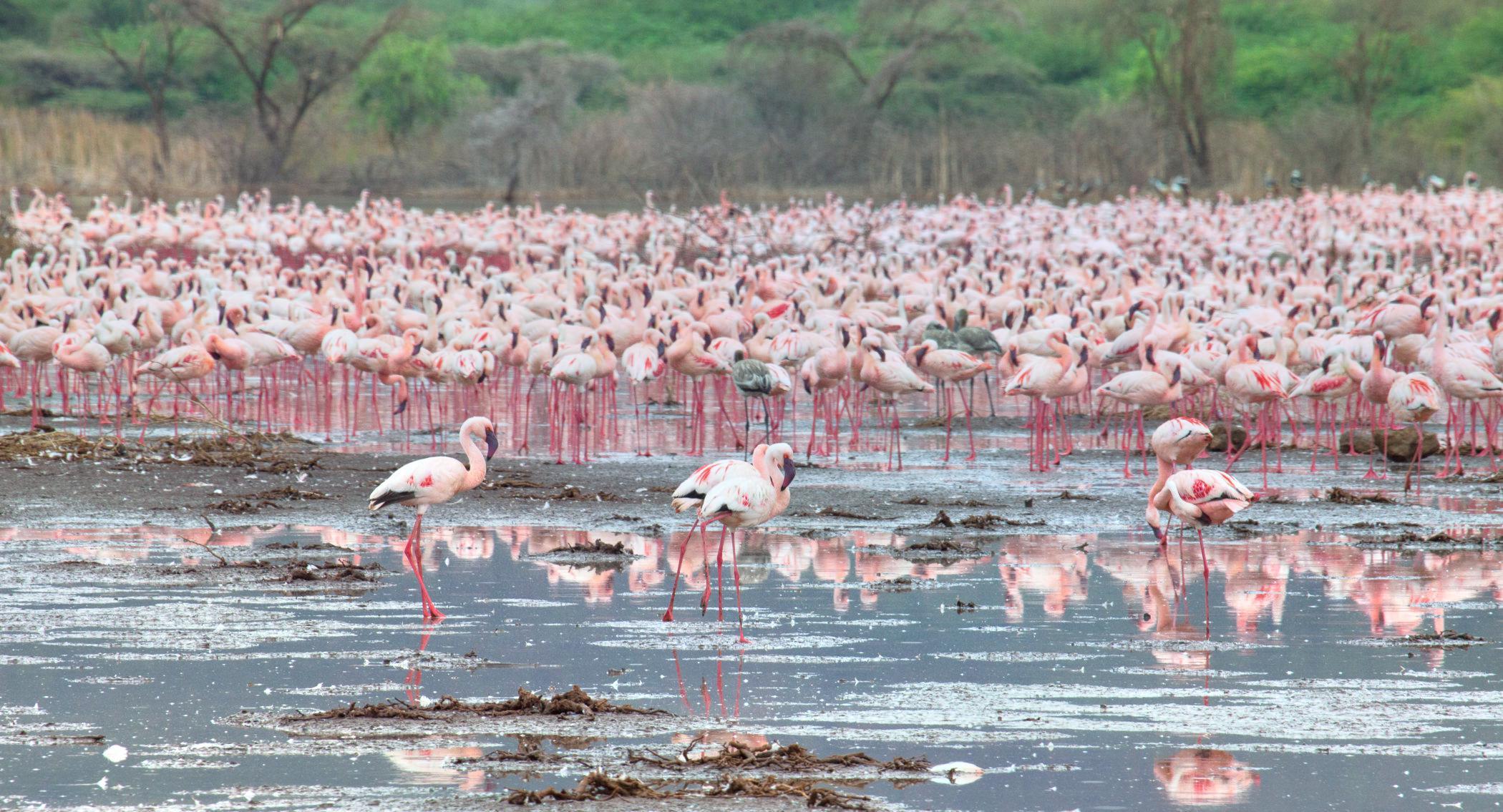 Lake Bogoria