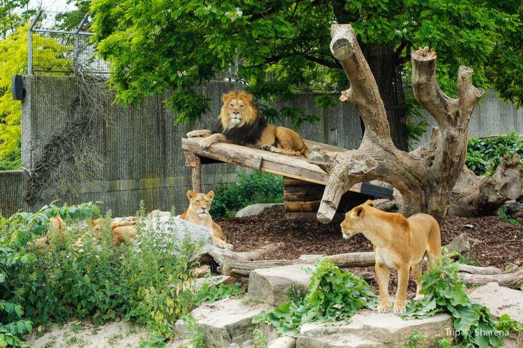 Copenhagen Zoo1